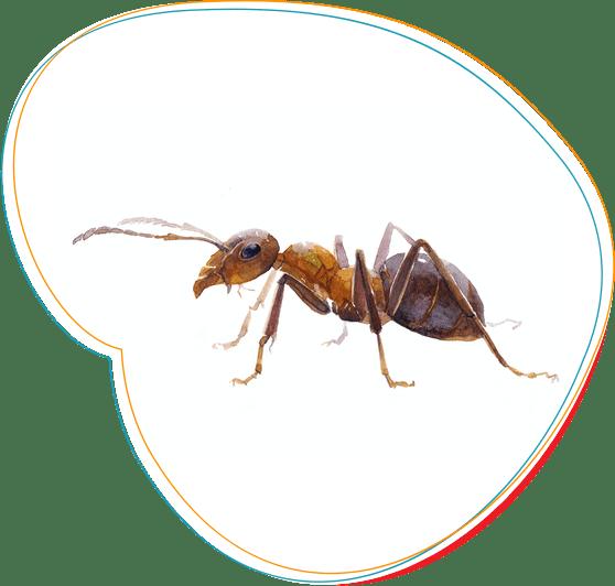 profesionalus skruzdziu naikinimas