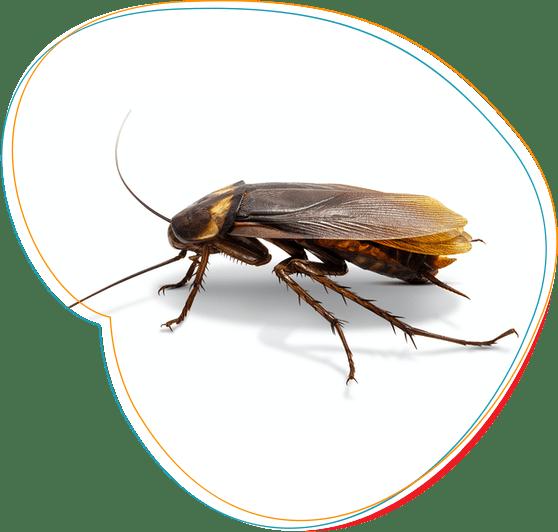 profesionalus tarakonu naikinimas