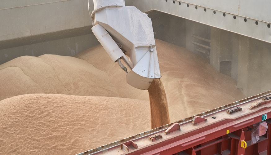 Grain loading in hold of bulk carrier ship with elevator